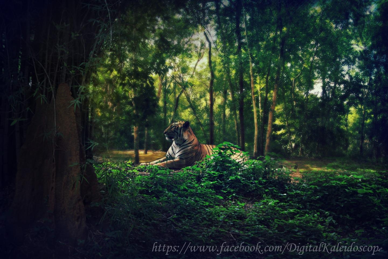 bannerghatta national park , Tiger , India , Karnataka , Bangalore , Tiger Safari